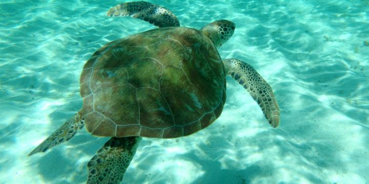Clifton – Tobago Cays
